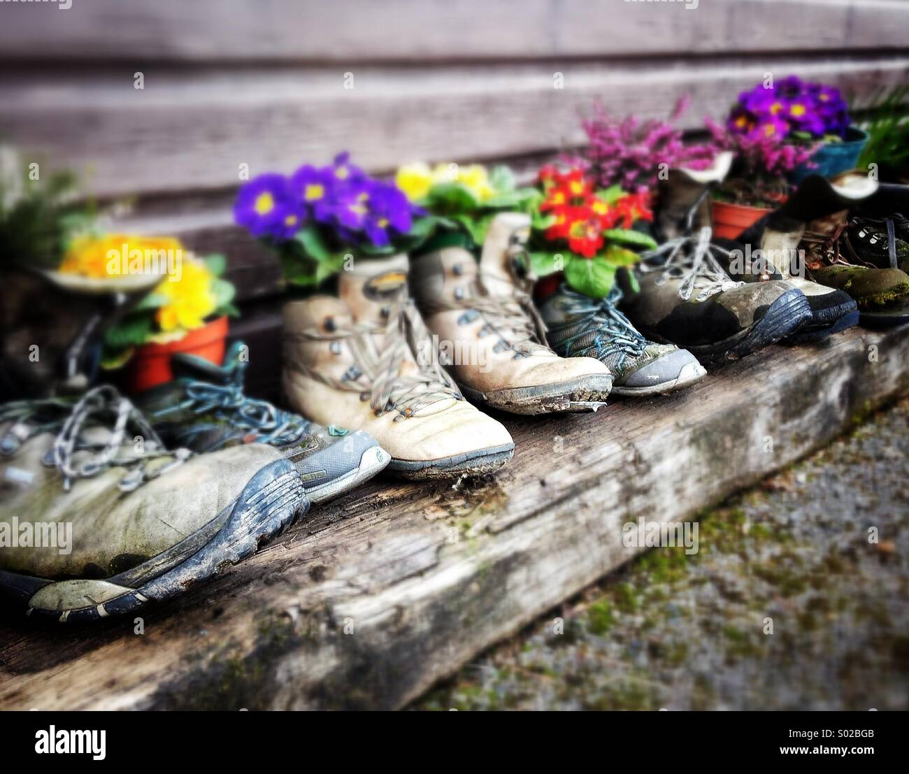 Blumen in alte Wanderschuhe Stockbild