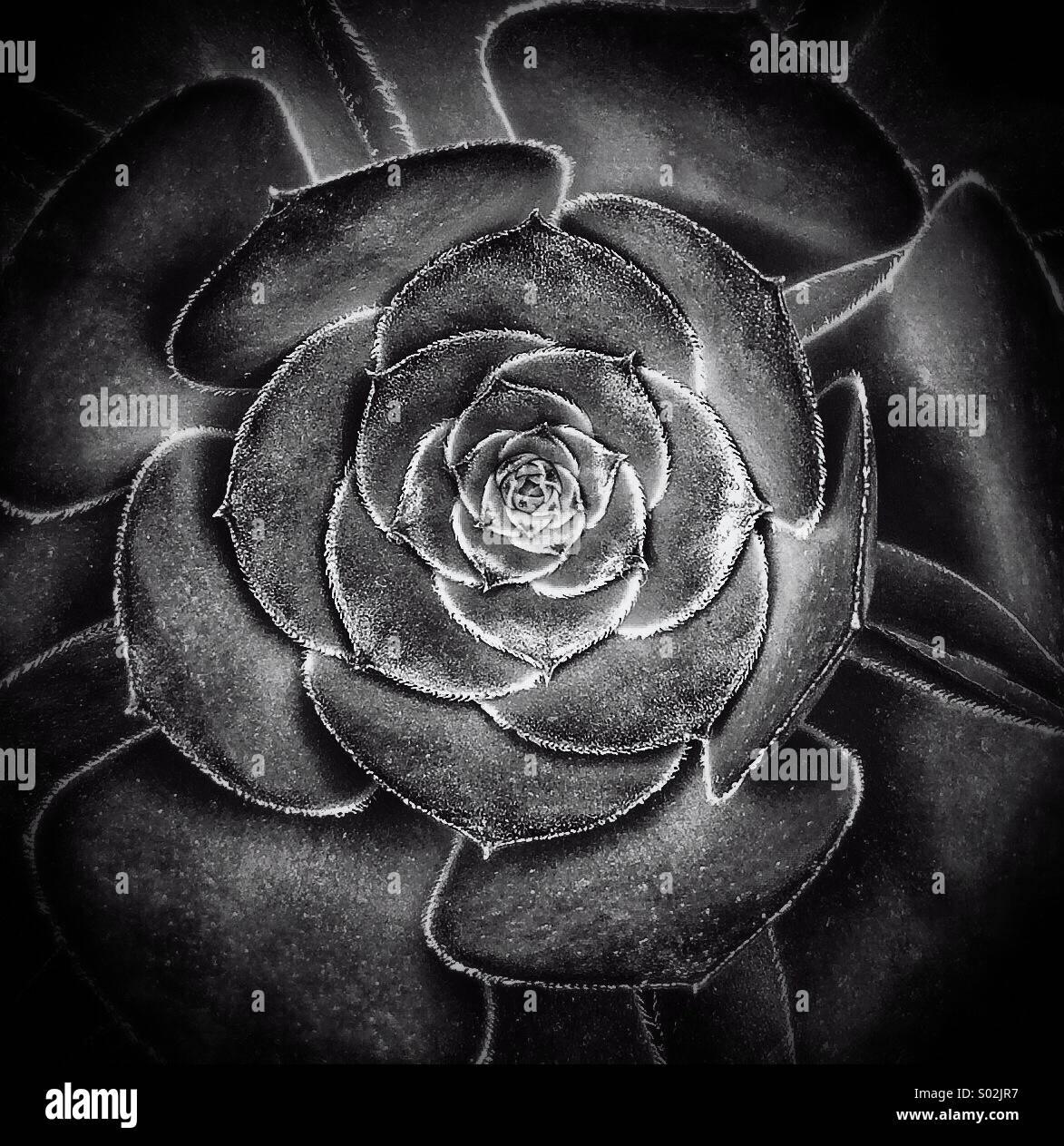 Schwarz / weiß Muster - Blume Stockbild