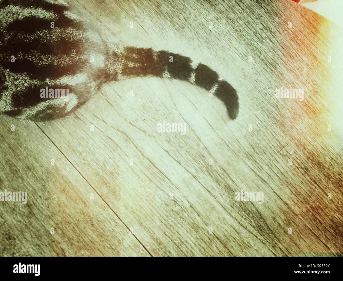 Katze-Tail mit Grunge-Effekt und Kopie. Stockbild