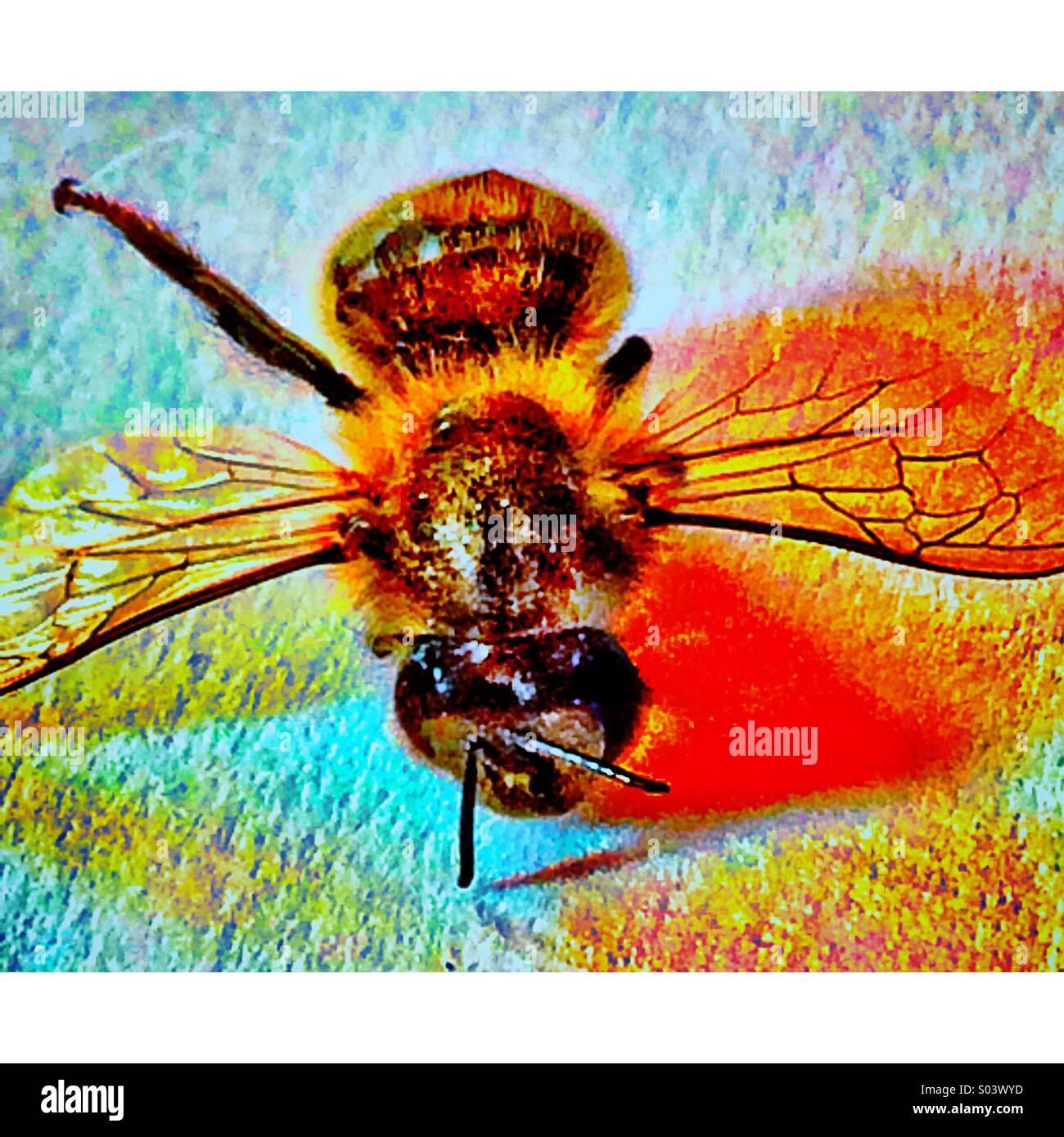 Nahaufnahme von Wespe auf Bettdecke Stockbild