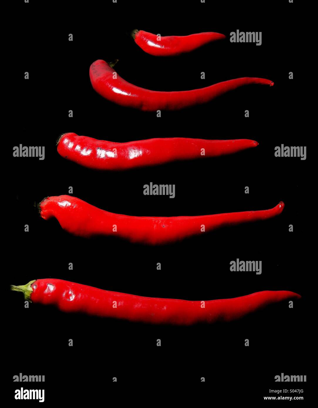 Rote Paprika Stockbild