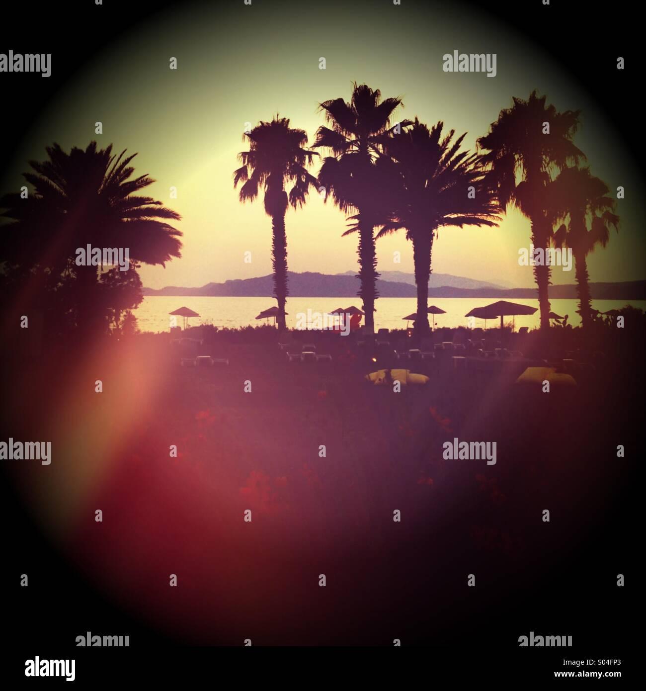 Palmen an einem exotischen Strand Ort. Stockbild