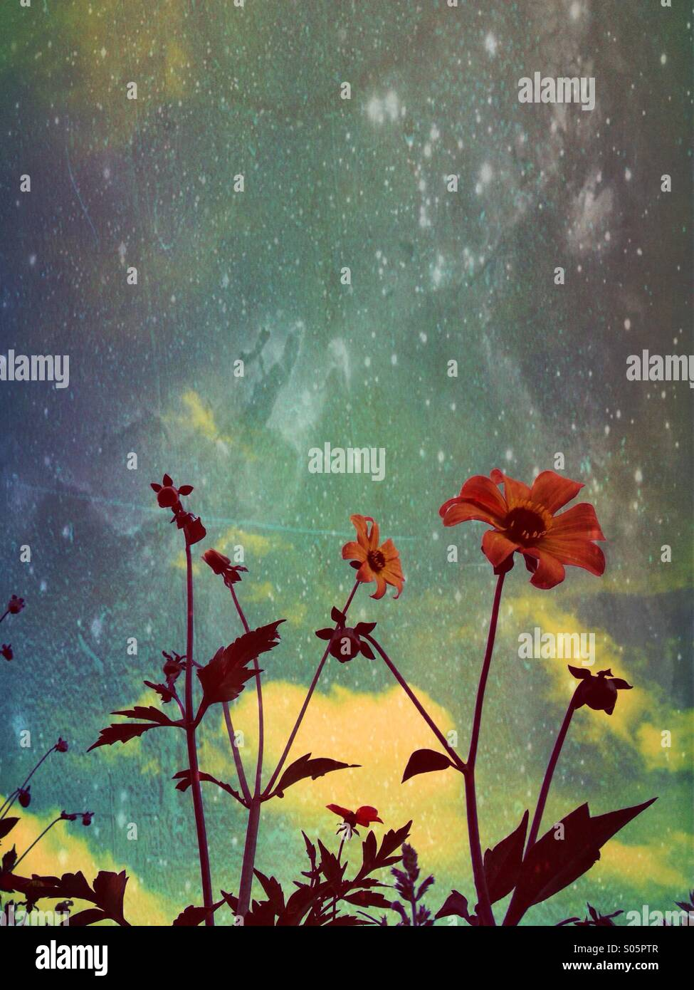 Dahlien mit blauem Himmelshintergrund Stockbild