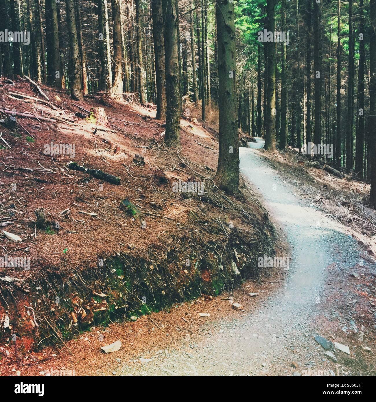 Wald-Trail führt von in der Ferne Stockbild