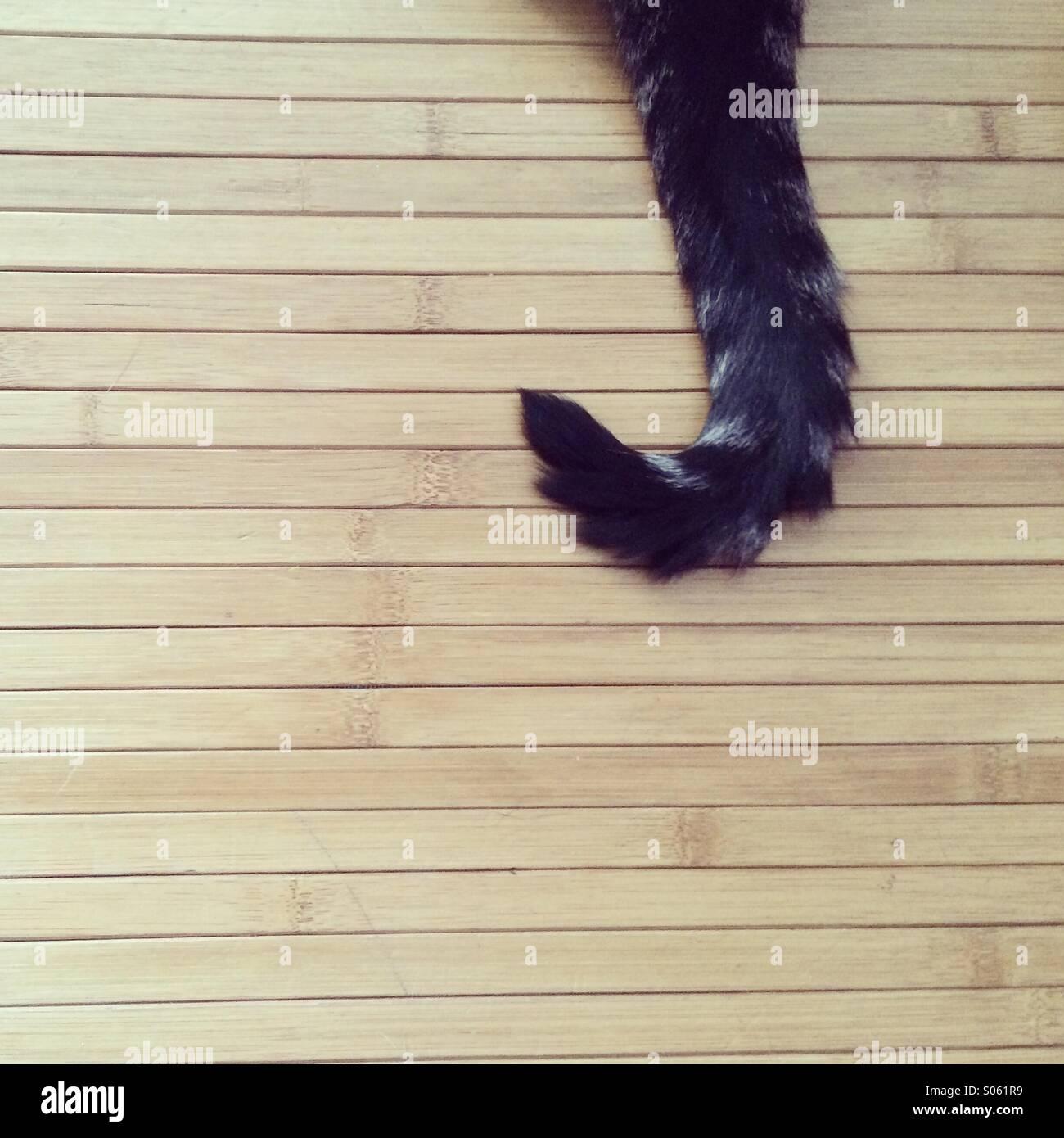 Katze-tail Stockbild