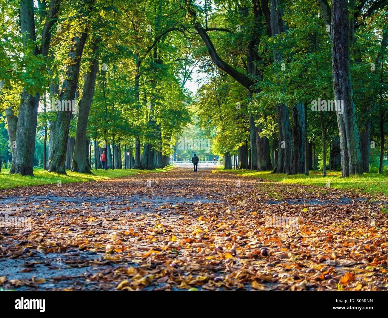 Farben des Herbstes in Deutschland, Gräflichen Park, Bad Driburg, Deutschland Stockbild