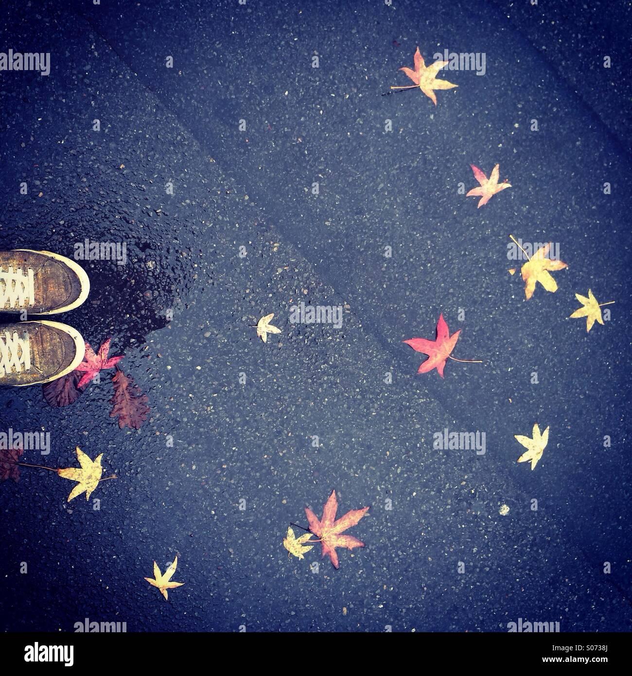 Auf der Suche nach unten im Herbst Stockbild