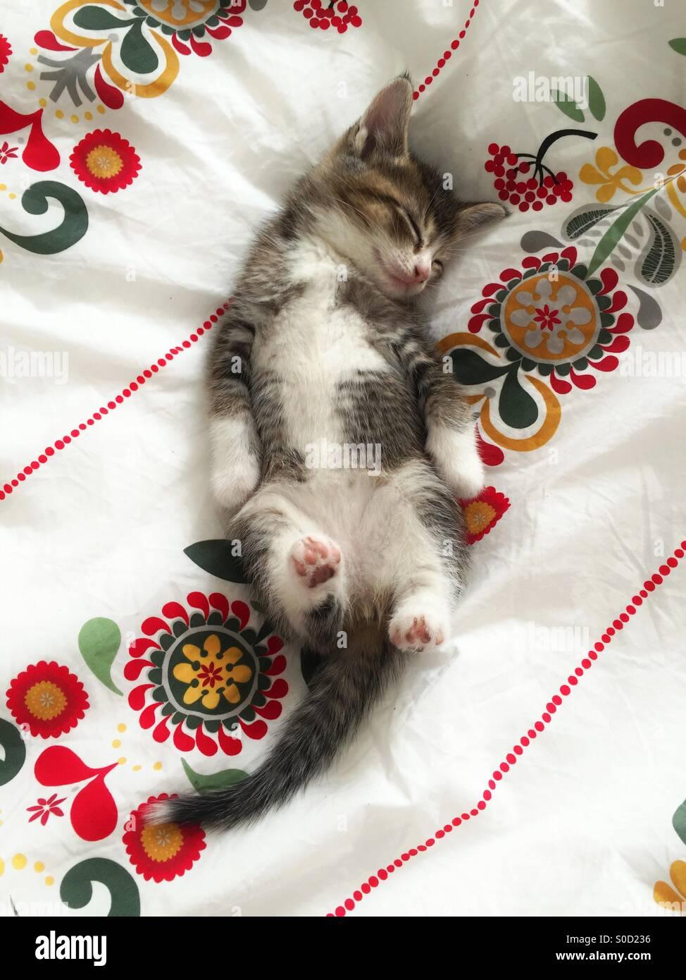 Tabby Kätzchen schlafen auf den Rücken zu Bettwäsche Stockbild