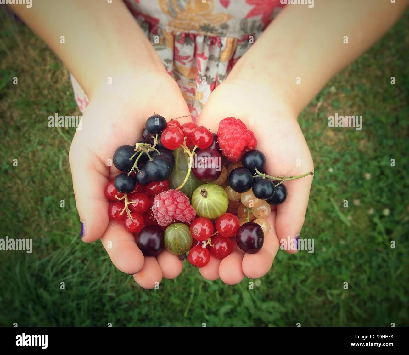 Früchte in Kinderhände Stockbild