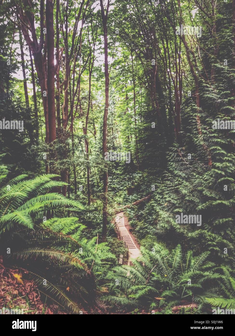 In den Wald Stockbild