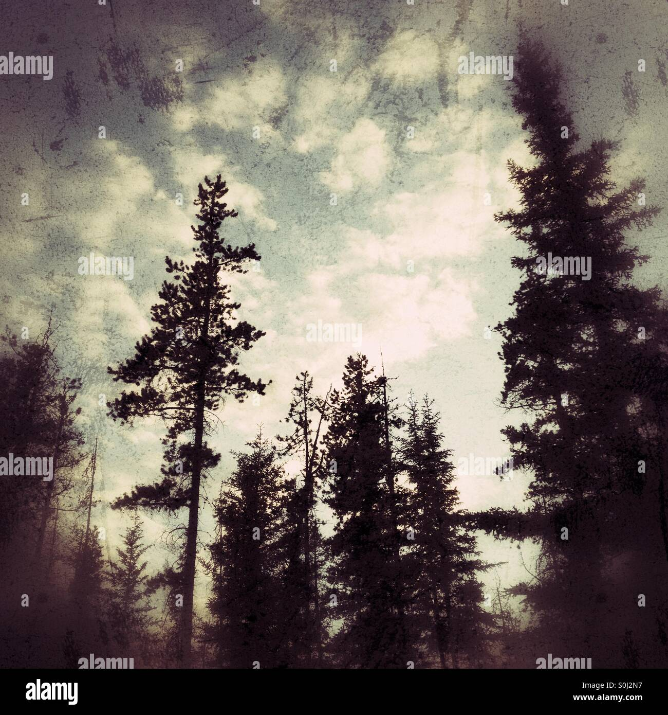 Bäume-silhouette Stockbild