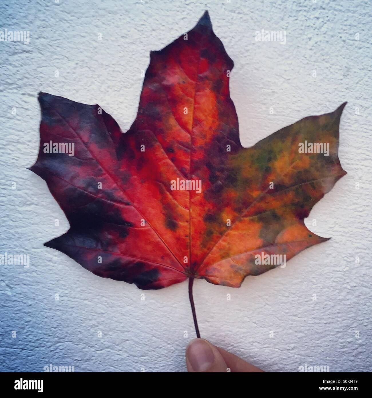Herbst Farben auf einem Blatt Stockbild