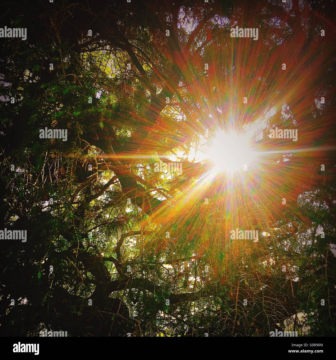 Zersplitterte Sonnenlicht brechen durch die Bäume Stockbild