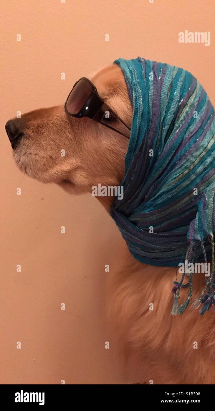 High Society Dog Stockfoto