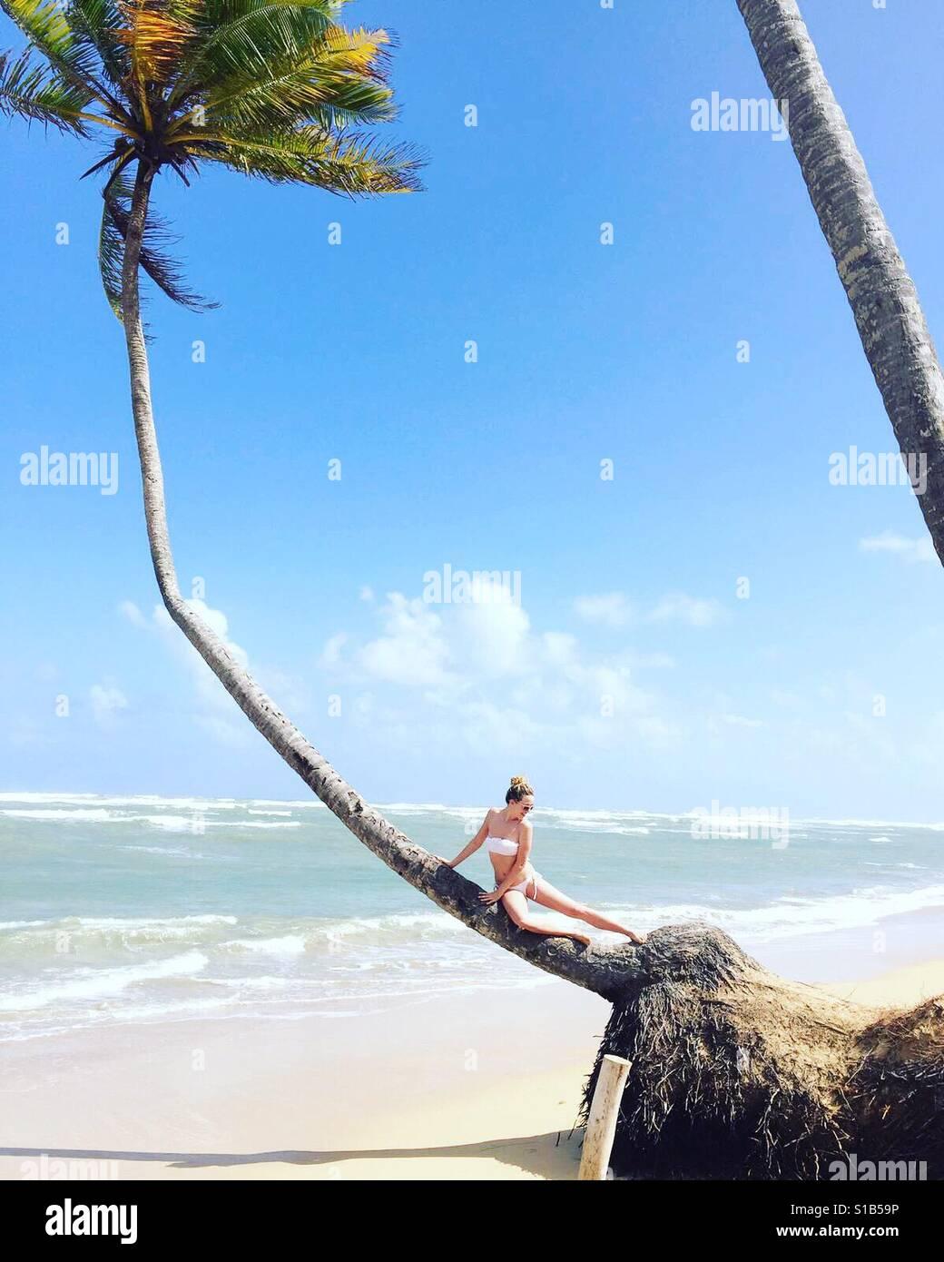 Palme sitzen in Punta Cana Stockfoto