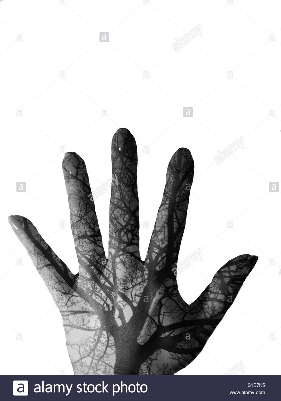 Hand/Baum Doppelbelichtung Stockfoto