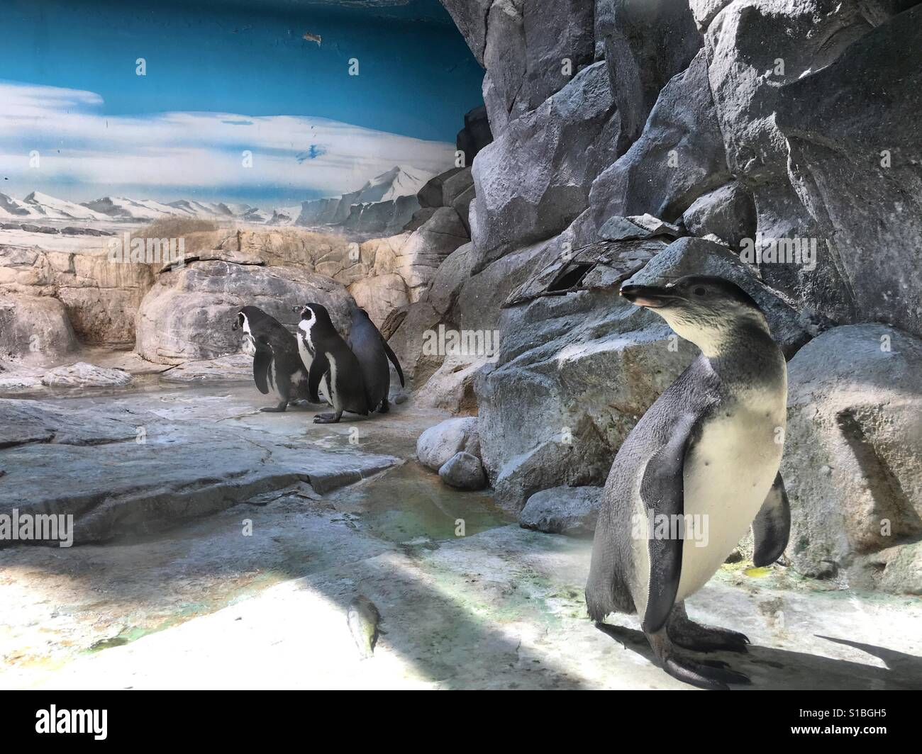 Pinguine Stockbild
