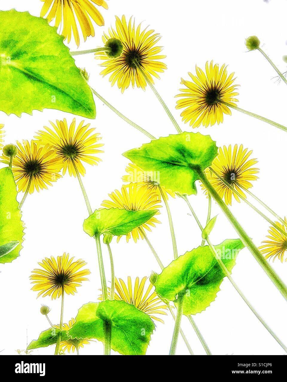 Gelben Blüten. Stockfoto