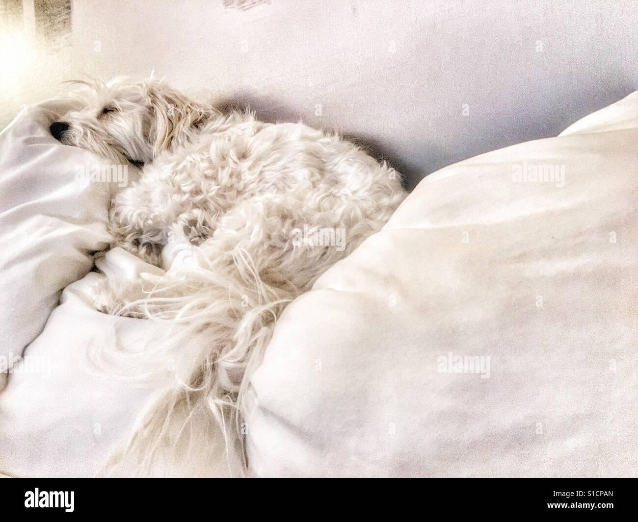 Hund schlafen Stockfoto