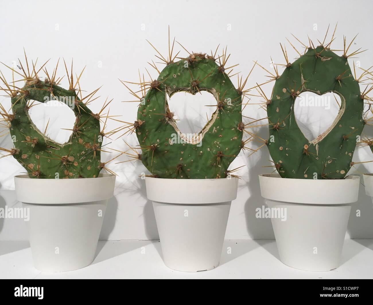 Liebe-Kaktus Stockfoto
