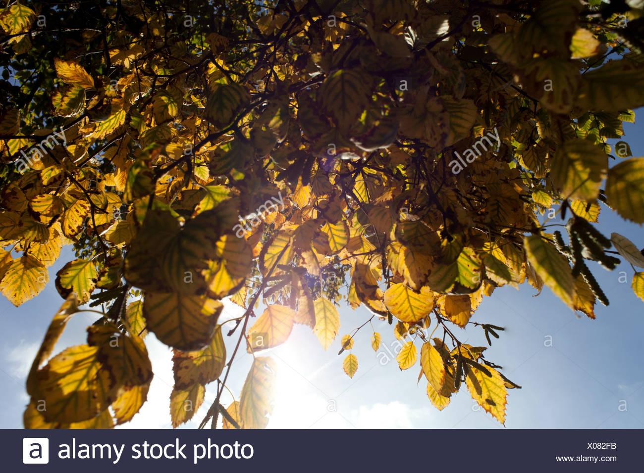 Herbstlaub, niedrigen Winkel Ansicht Stockbild