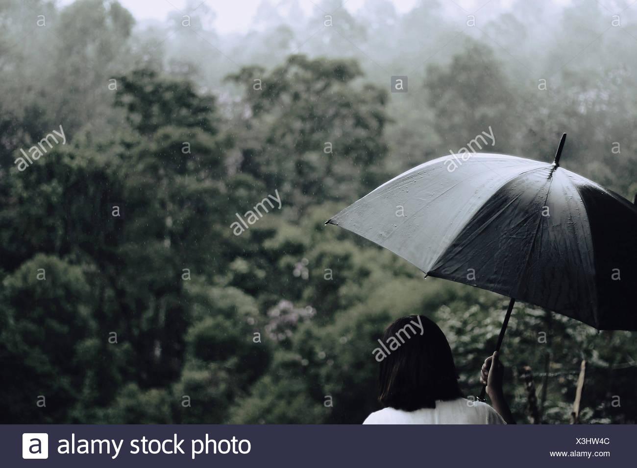 Rückansicht des Frau mit Regenschirm mit Bäumen im Hintergrund Stockbild