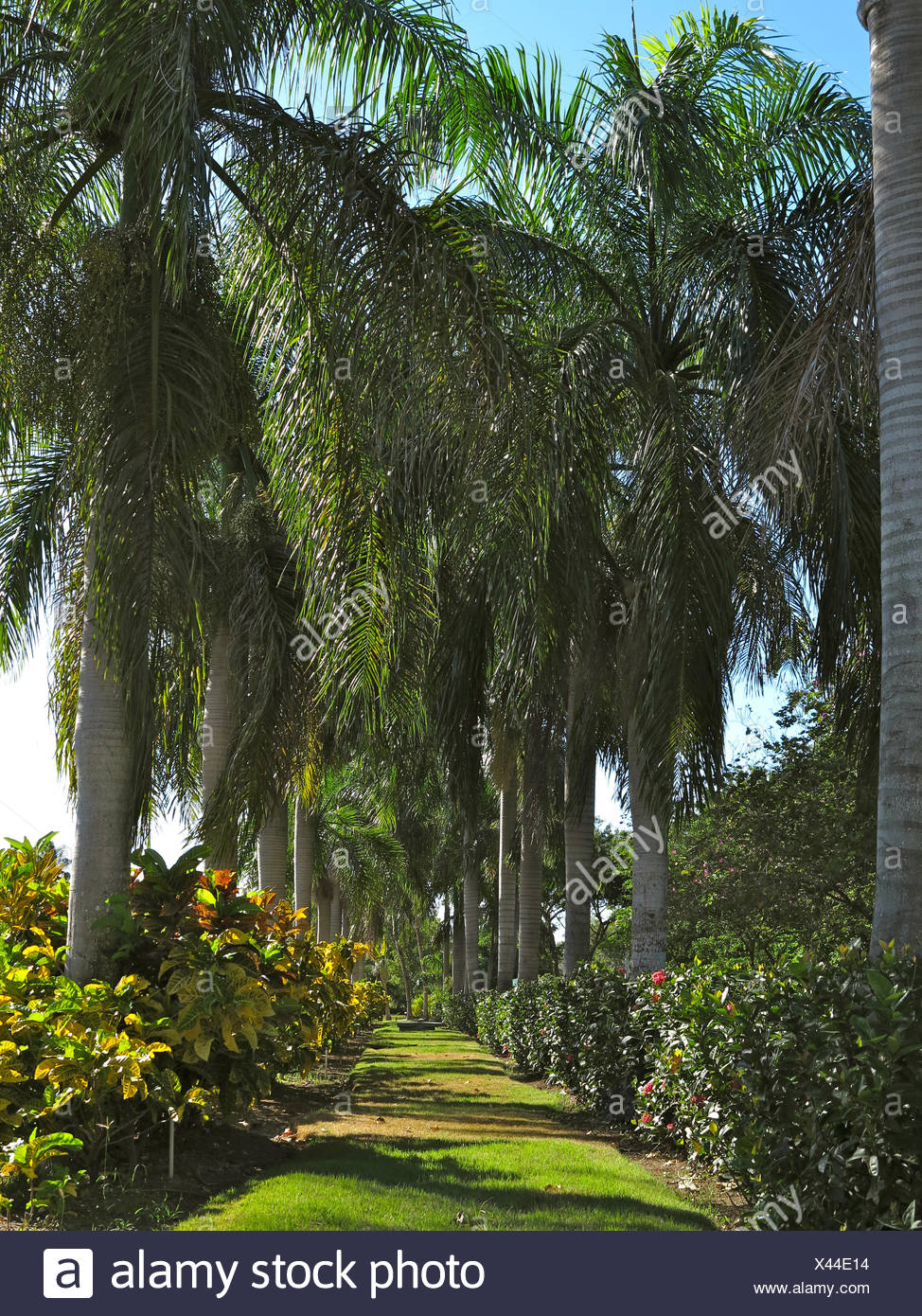 Karibik, Dominikanische Republik, Punta Cana, Playa Bavaro Stockbild