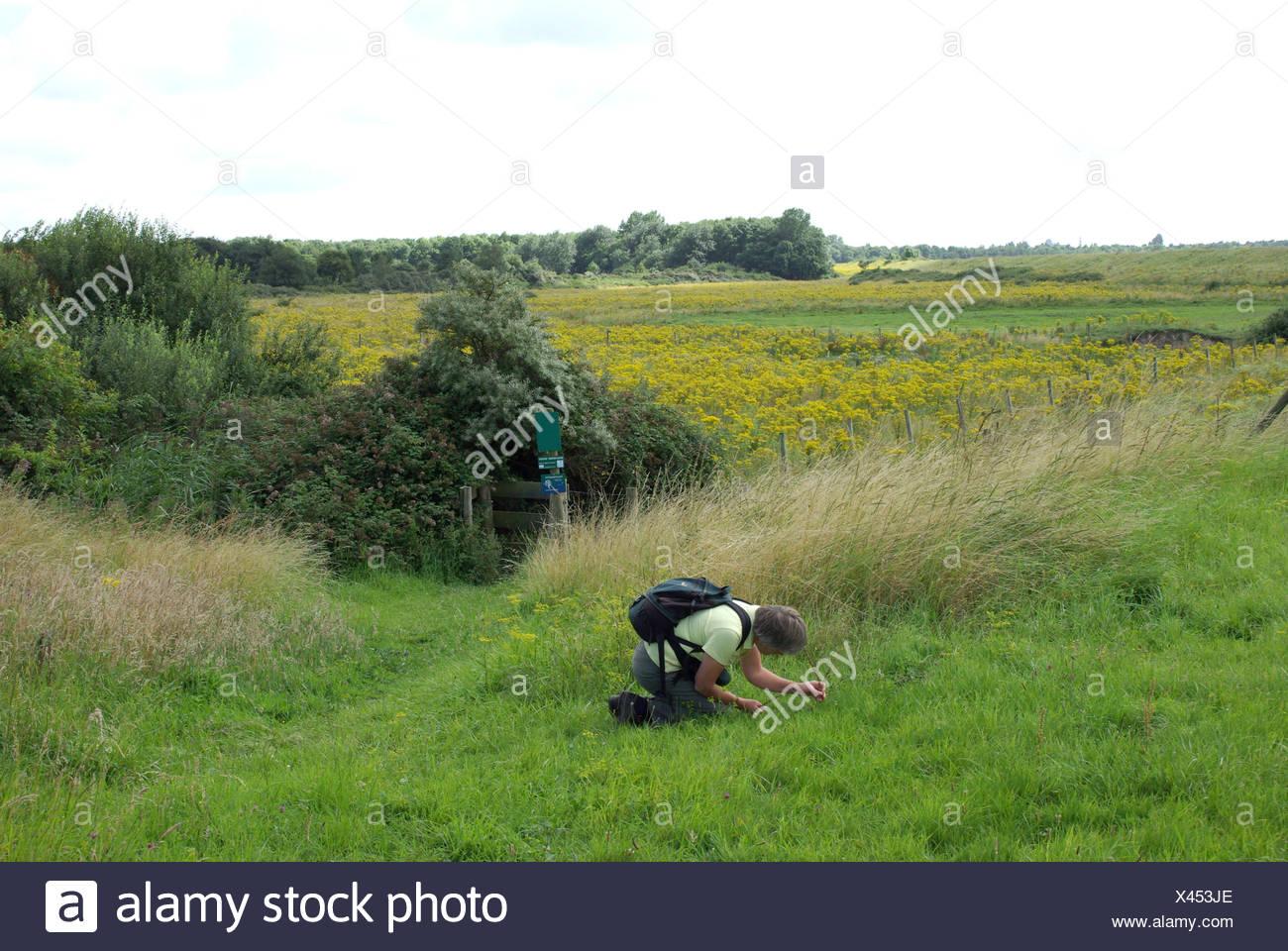 Een Plantenliefhebber ist Bezig traf Fotografie; Ein Werk-Anhänger ist mit Fotografie beschäftigt Stockbild