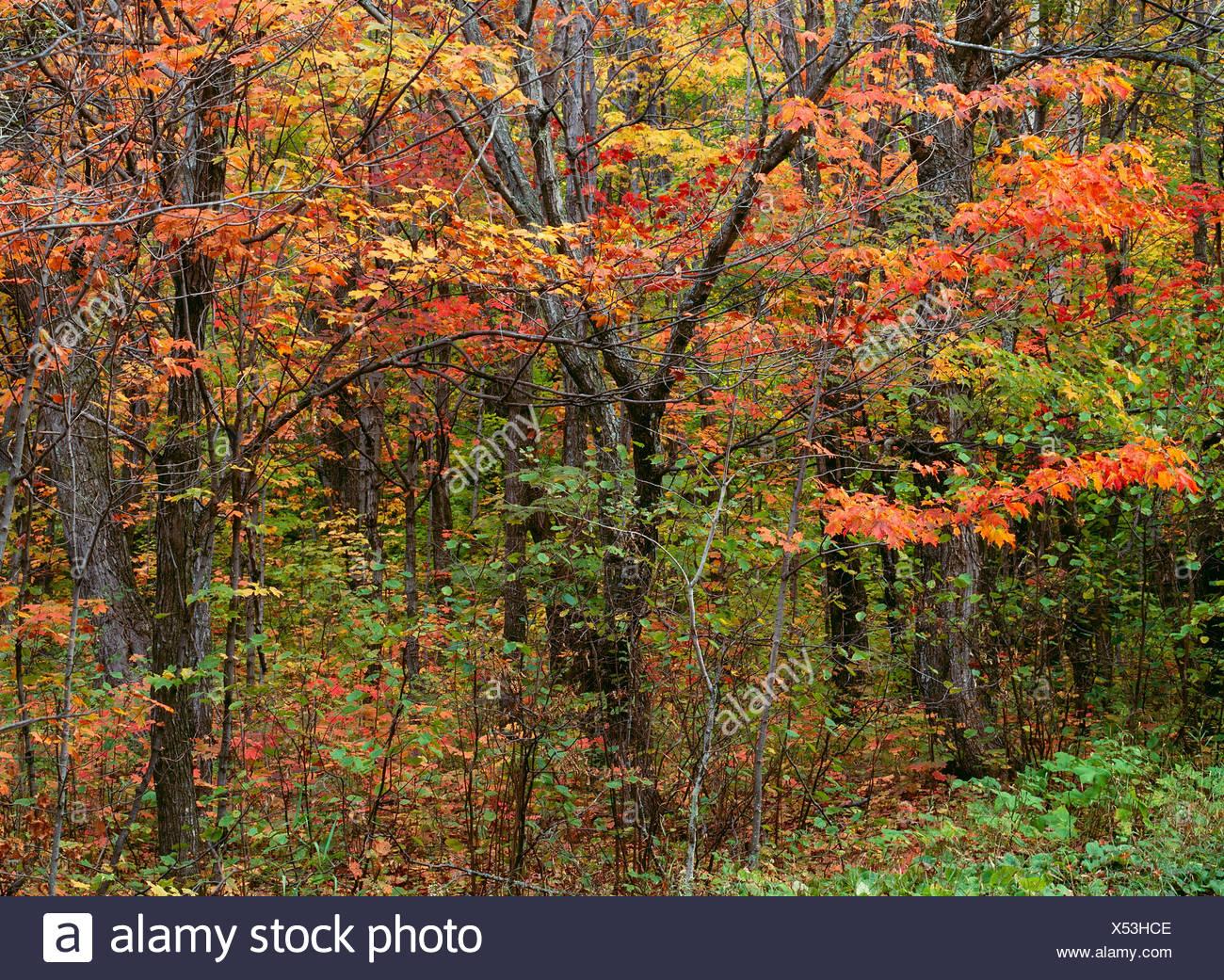 Herbstfarben im Superior National Forest, Minnesota Stockbild
