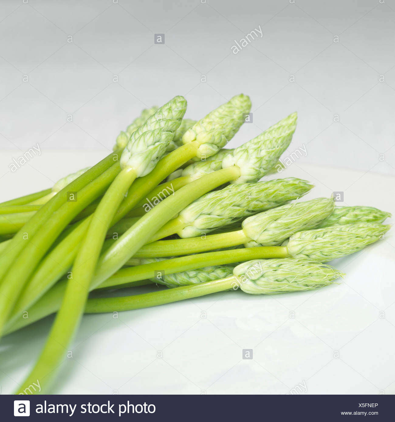 Wilder Spargel, close-up Stockbild