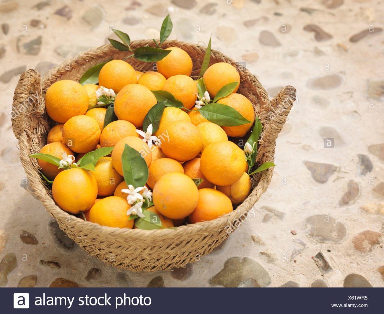 citrus tree flowers stockfotos citrus tree flowers bilder alamy. Black Bedroom Furniture Sets. Home Design Ideas