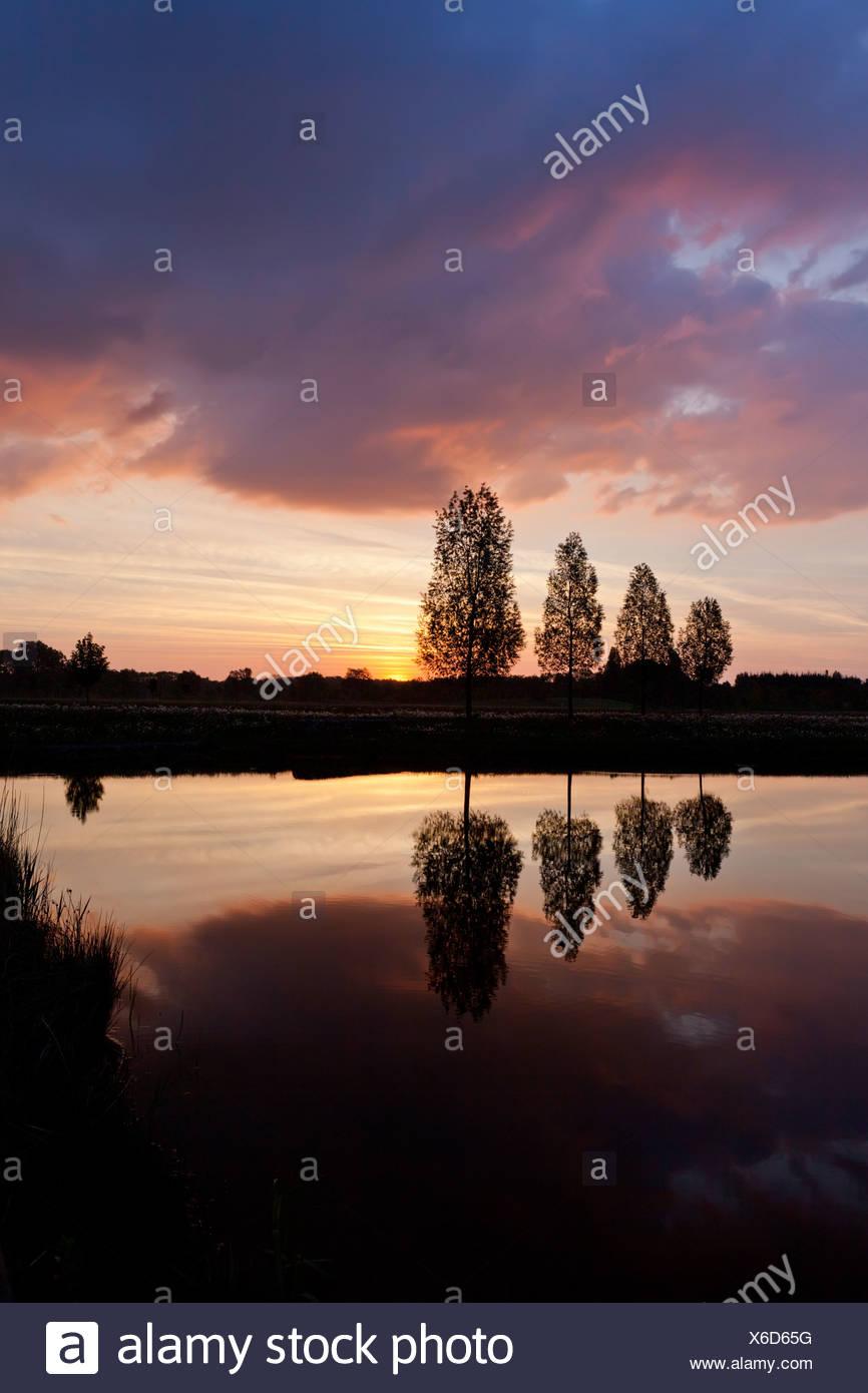Blattlosen Baum in der Nähe von See Sonnenuntergang Hintergrund Himmel Stockbild