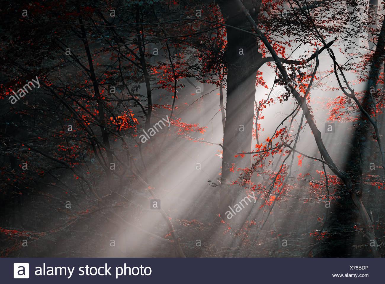rote Farben und Subeams im Wald Stockbild