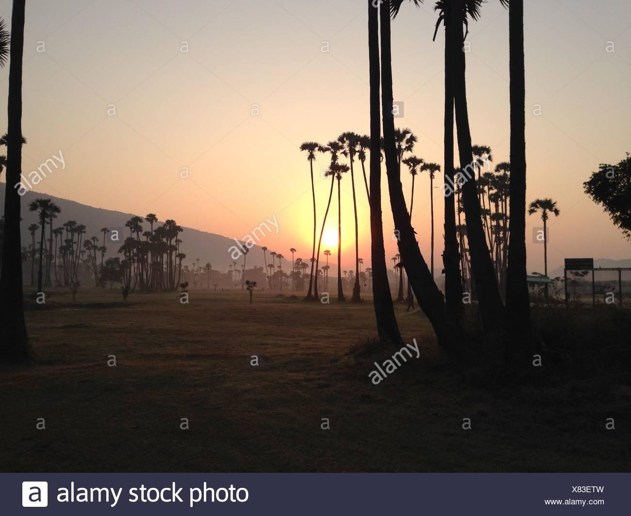 Indien, Andhra Pradesh, Vishakhapatnam, Vishakapatnam Bypass, Sonnenaufgang über Palmen Stockbild