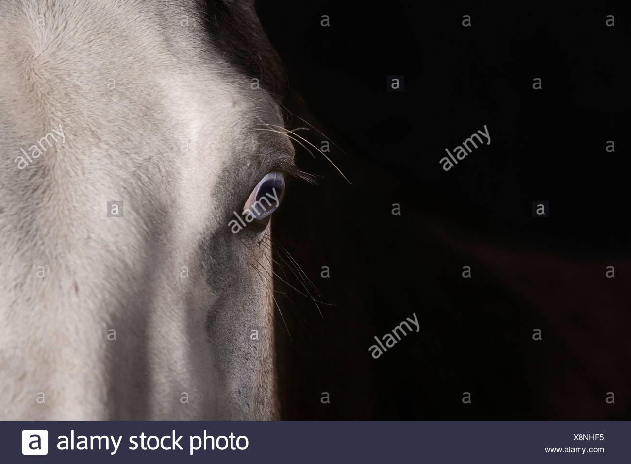 Detail der Pferdekopf Stockbild