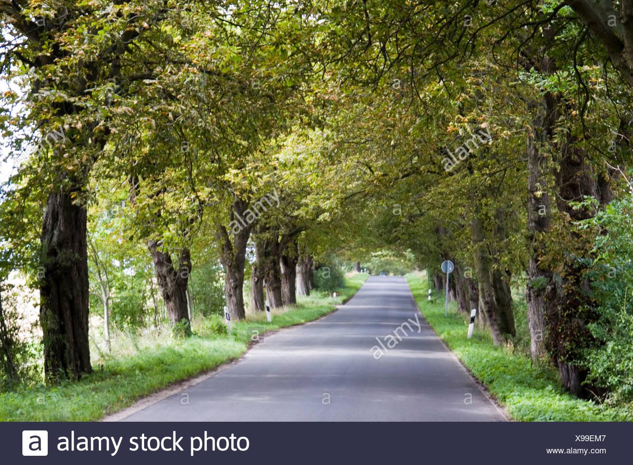Deutschland, Rügen, Bäumen gesäumt Straße Stockbild