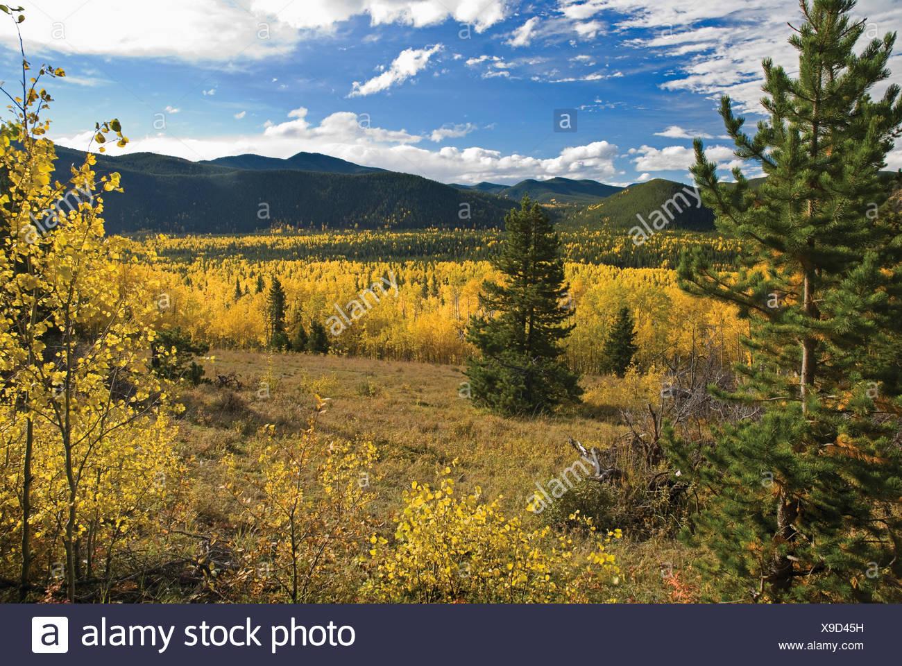 Herbstfarben in den Rocky Mountains; Bragg Creek, Alberta, Kanada Stockbild