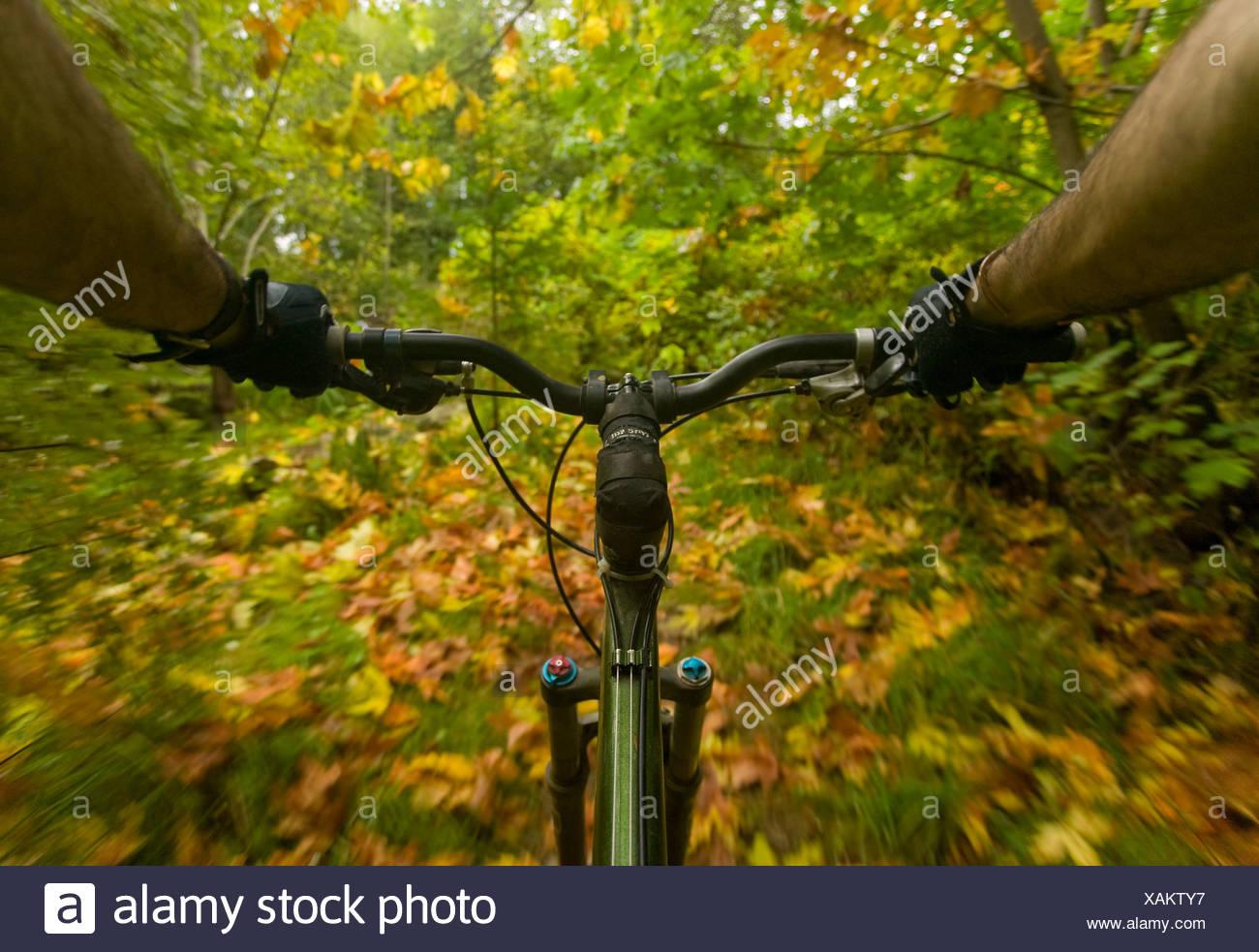 Mountainbike-Strecke zeigt seine Aumtumn in Streifen von gelben und grünen Farben.  Courtenay, Comox Valley Vancouver Island, british Stockbild