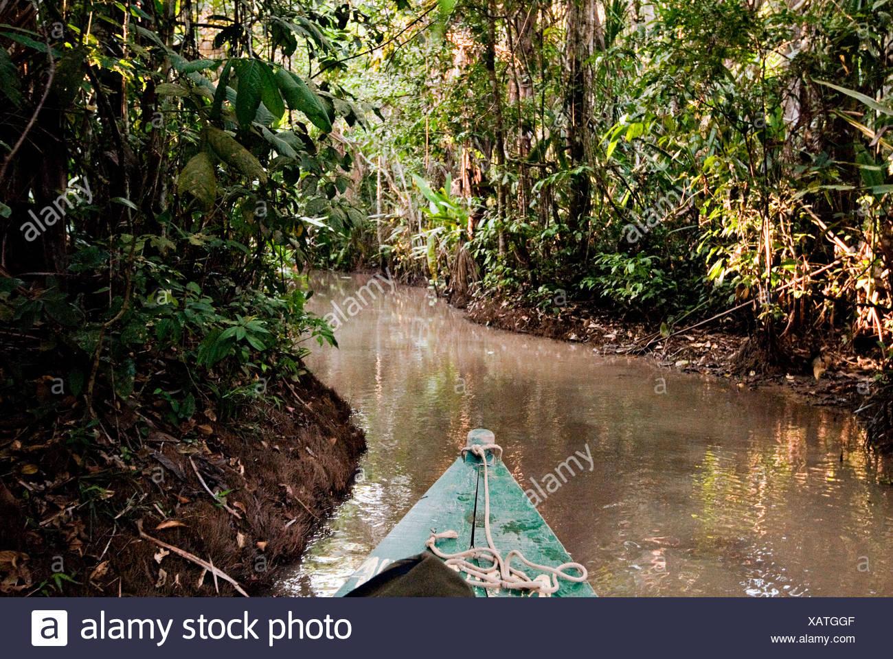 Amazonas-Regenwald, Puerto Maldanado, Peru. Stockbild