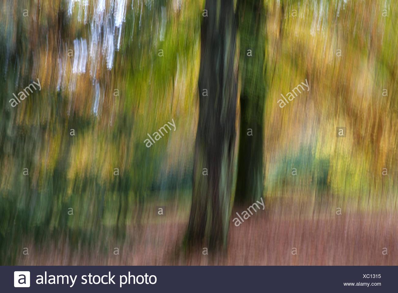 Herbstwald Eindruck Stockbild