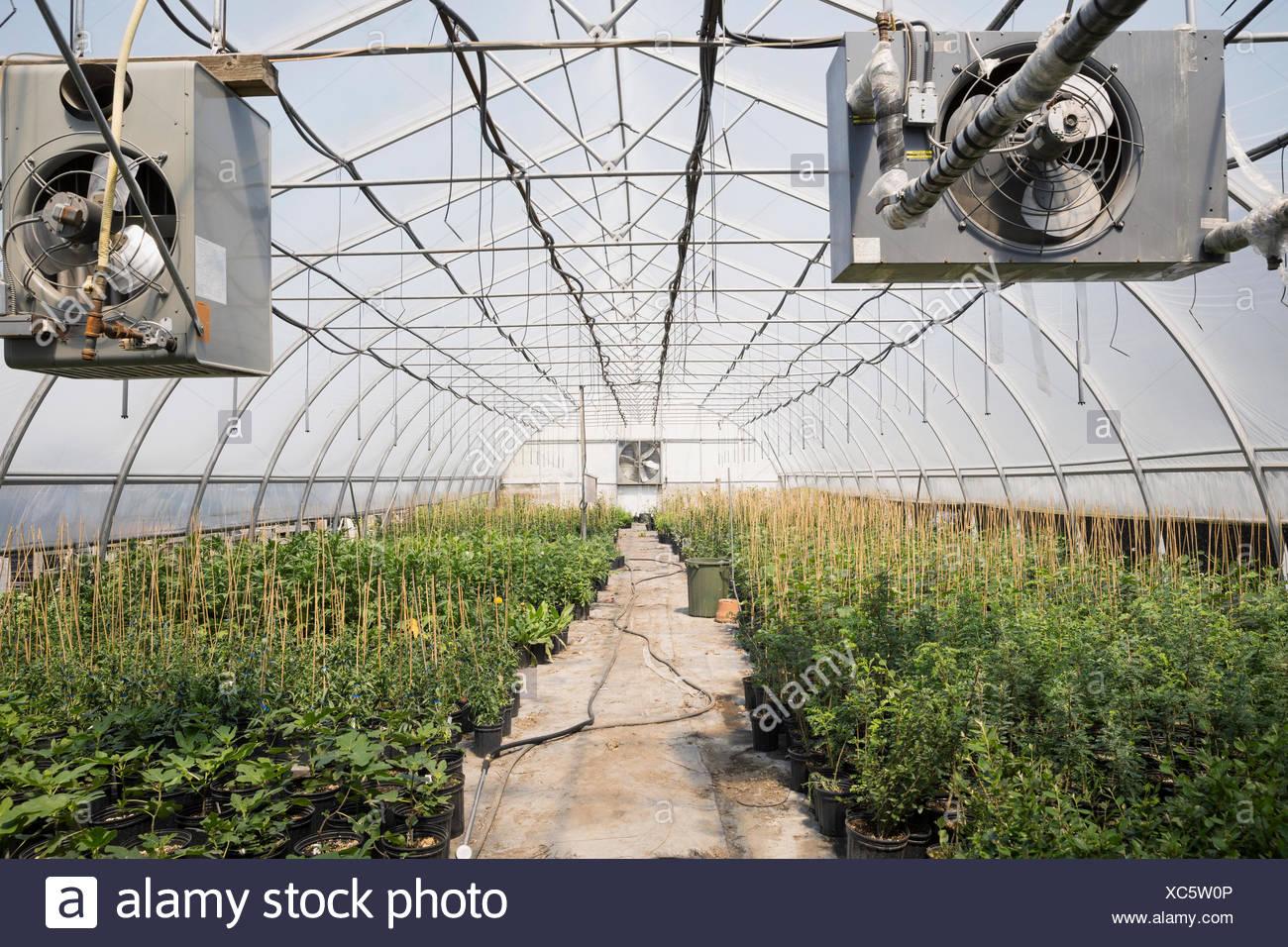 Reihen von Pflanzen im Gewächshaus Stockbild