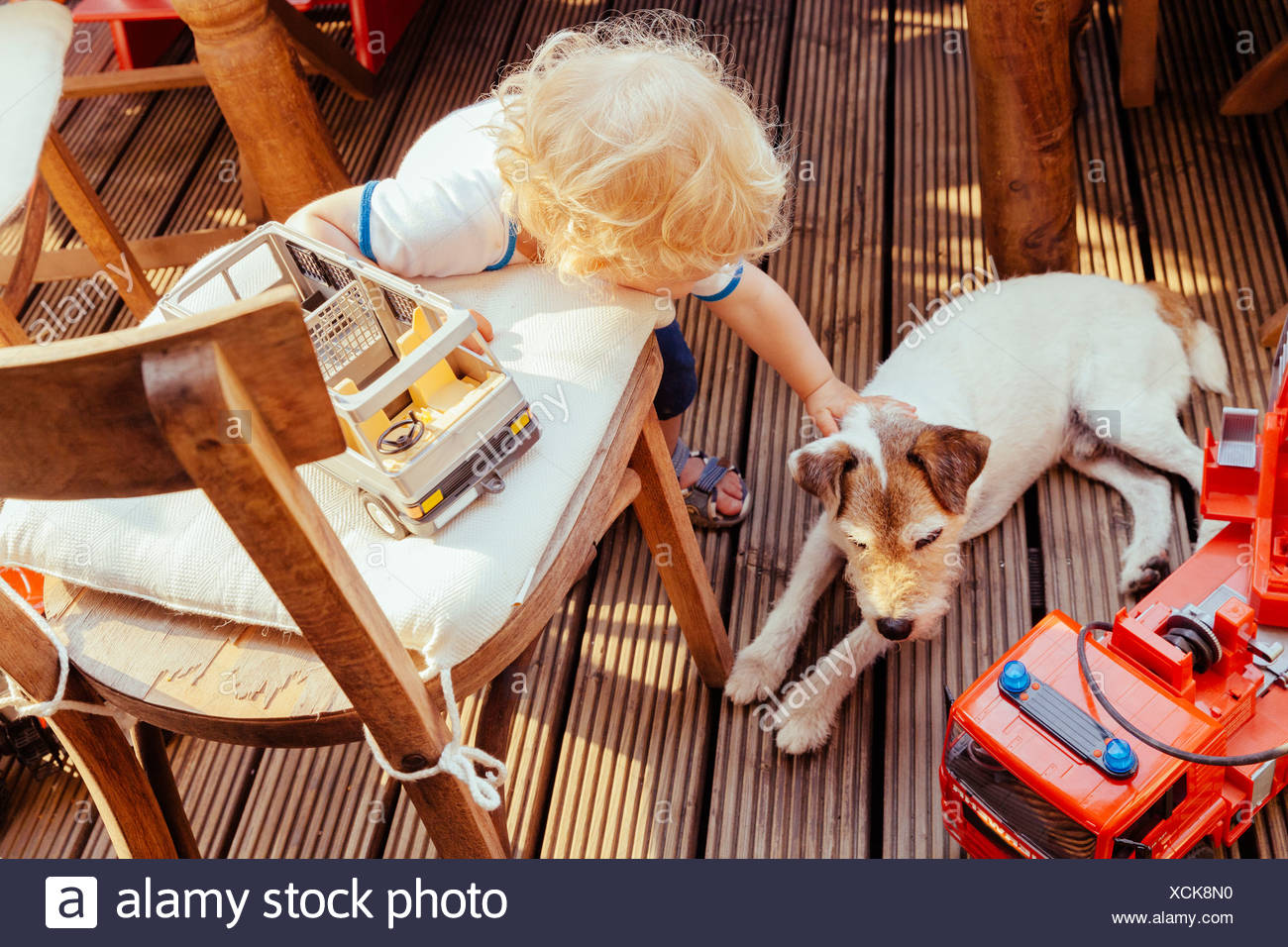 Kleiner Junge spielt mit Jack Russel Terrier und Fahrzeug Spielzeug, erhöht, Ansicht Stockbild