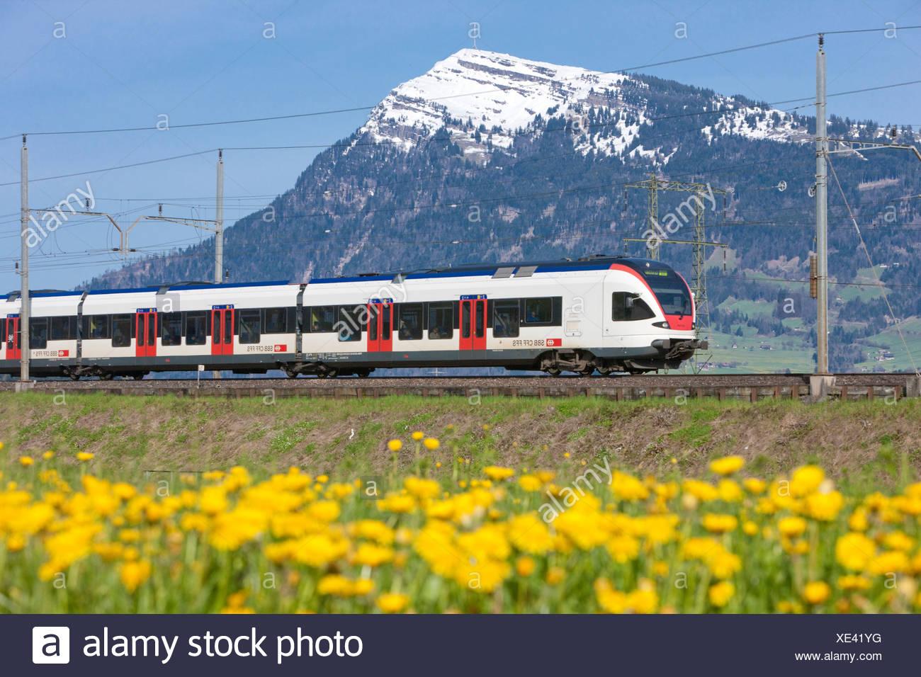 Regional Bahn, Rigi, Straße, Bahn, Zug, Eisenbahn, Berg, Berge, Blume, Blumen, Kanton Schwyz, SZ, zentrale Großbrit Stockbild