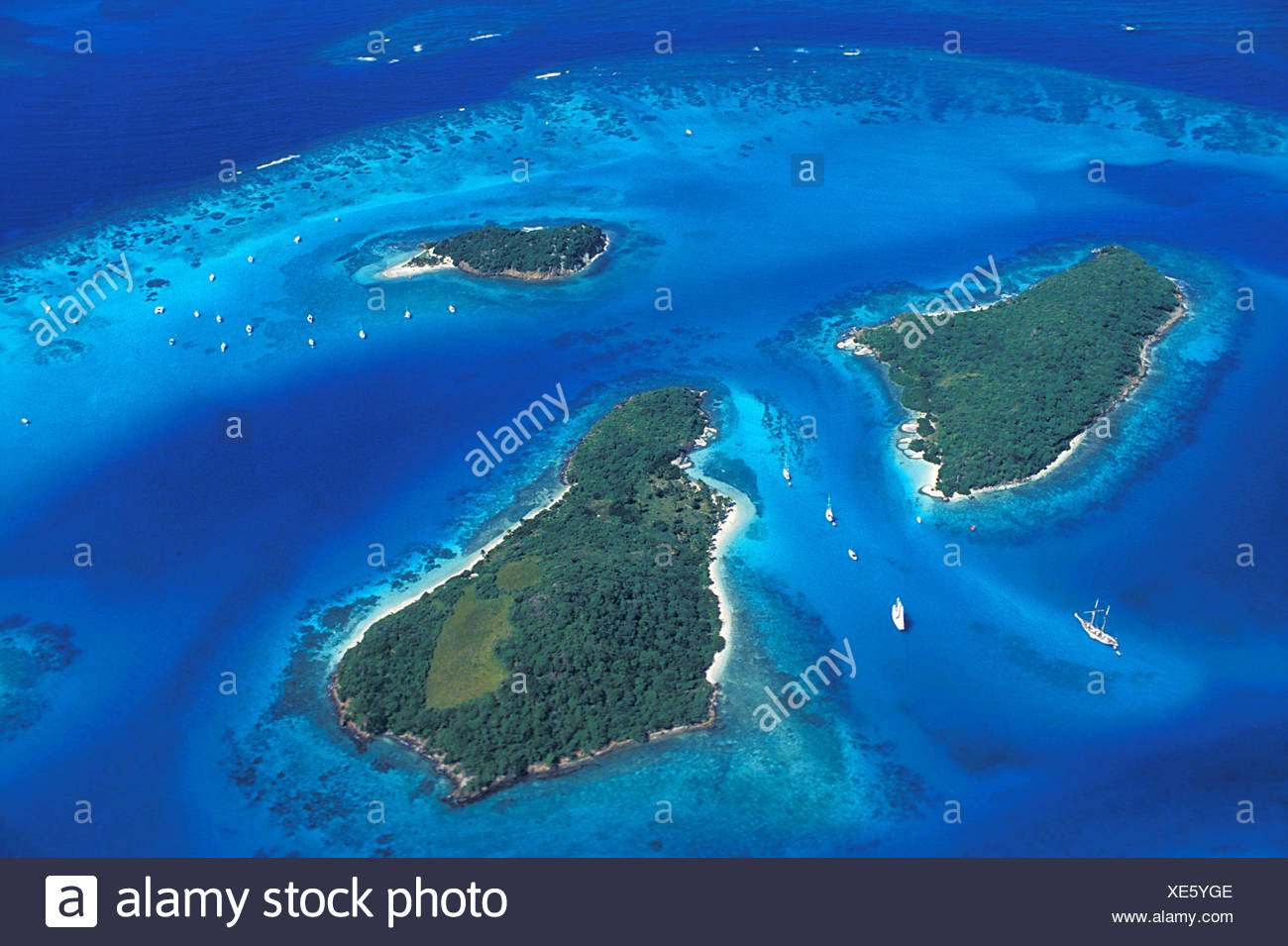 Karibik, Granatäpfel, Tobago Cays Stockbild