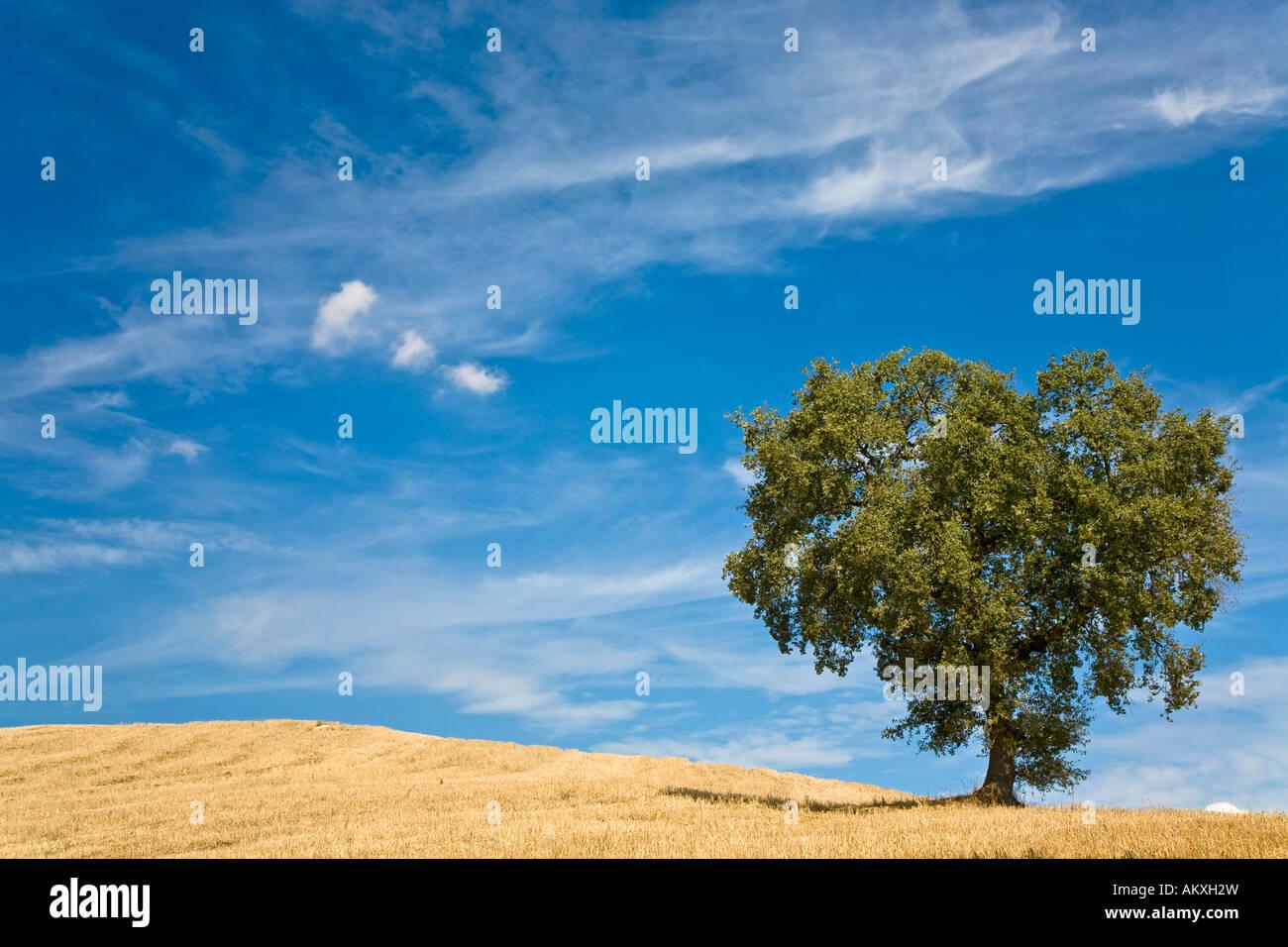 árbol Con Forma De Corazón En El Campo De La Toscana Italia Foto
