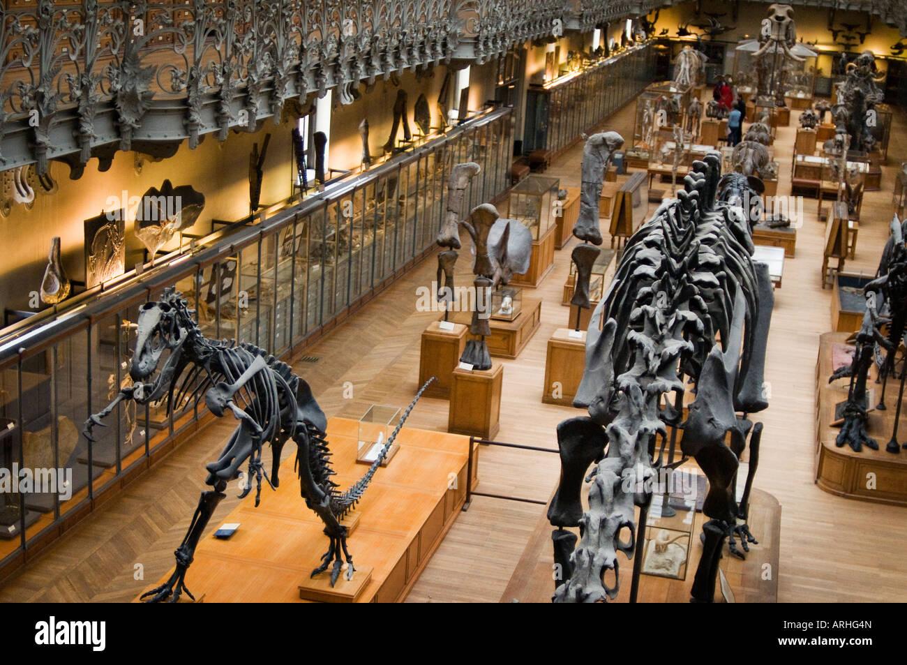 Esqueleto de un Allosaurus en Anatomía Comparada y Paleontología del ...