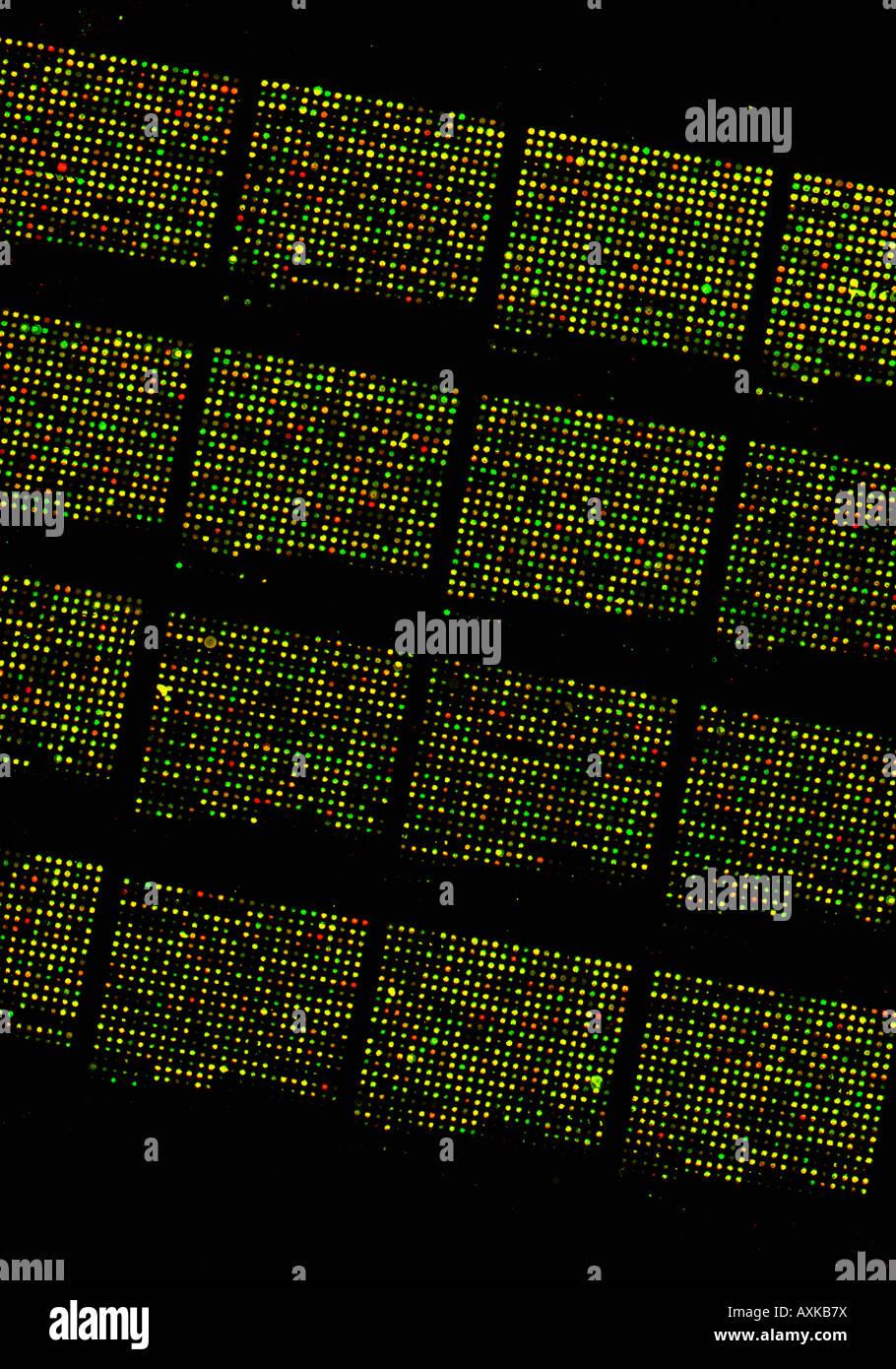 Matriz Micro Chip De Adn Estructura Del Genoma Humano Foto