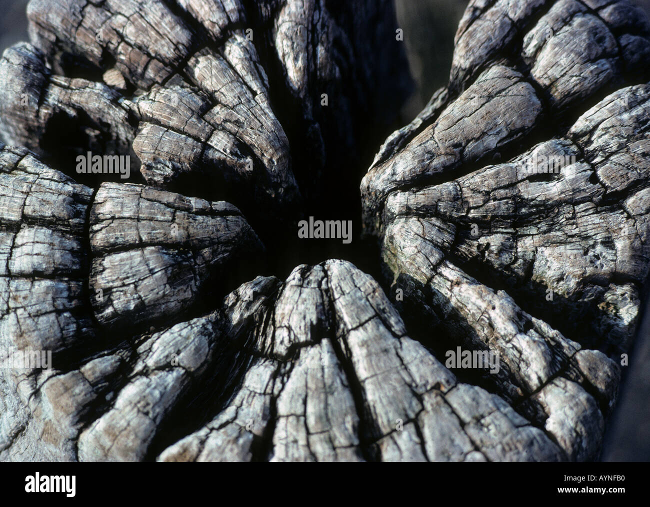 Cerca de capeado tocón de madera blanqueada apoyando un muelle abandonado Imagen De Stock