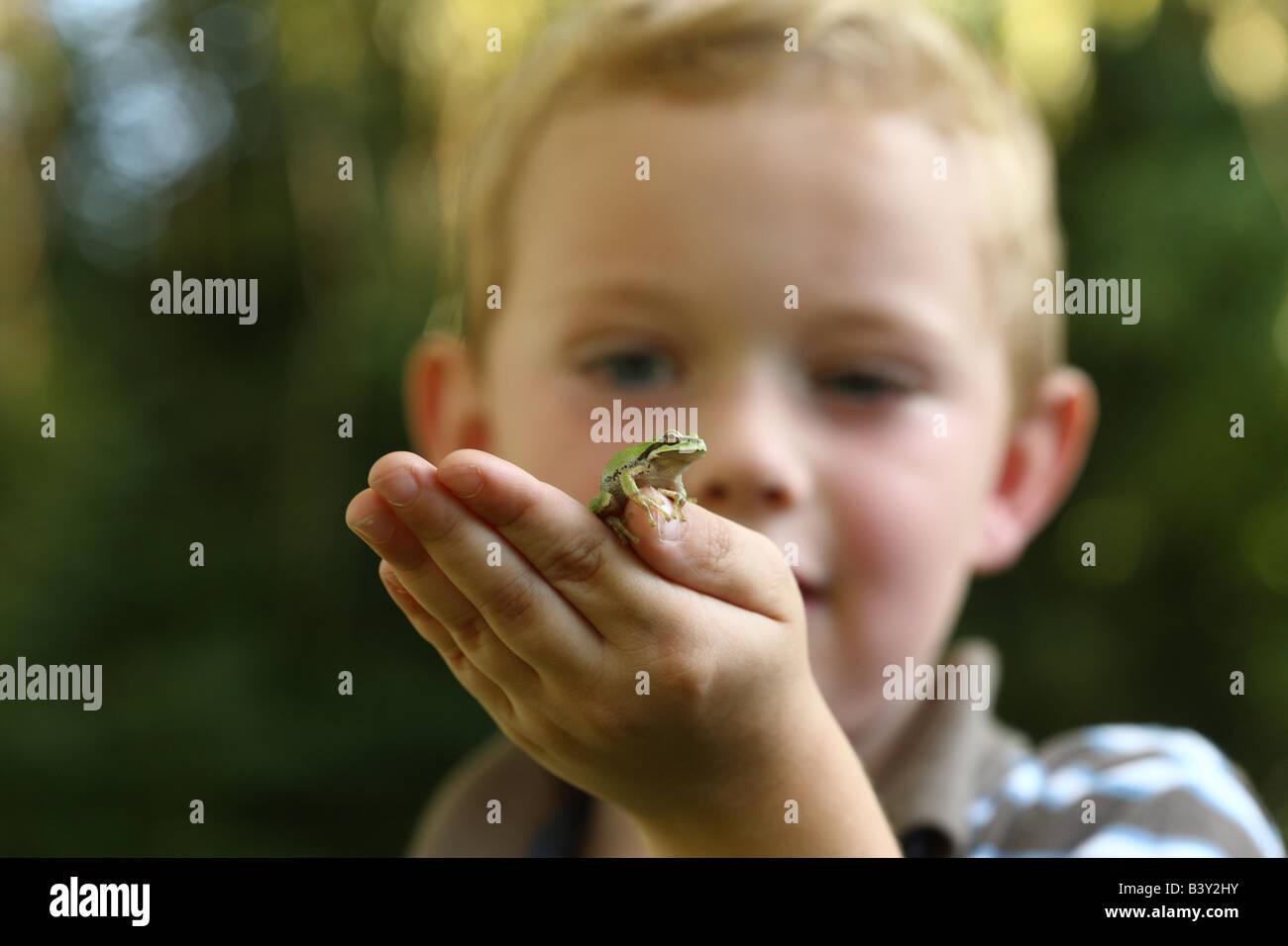 Joven celebración pequeña rana de árbol Imagen De Stock