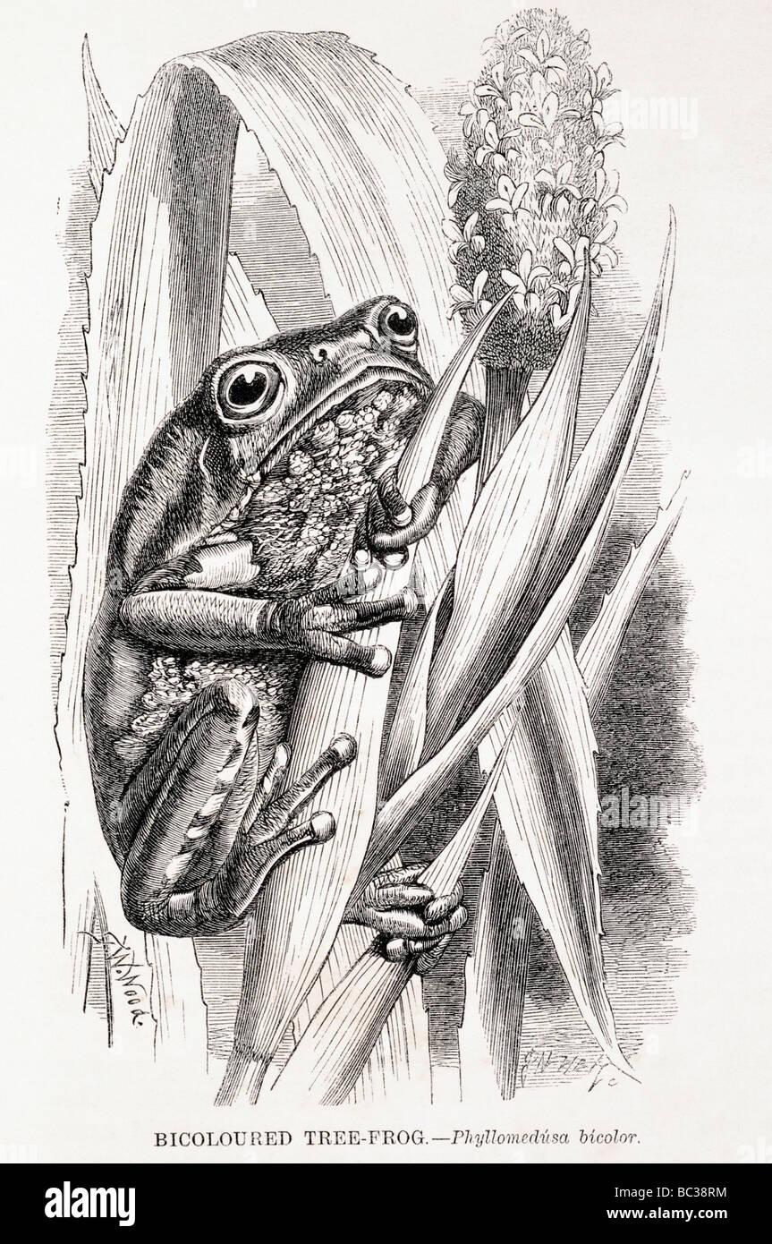 Frogs Graphic Imágenes De Stock & Frogs Graphic Fotos De Stock ...